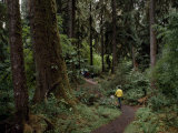 Hiker on a Forested Trail in the Olympic Peninsula