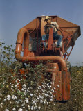 Farmer Drives a Mechanical Picker Through a Cotton Field
