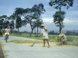 Farmer Sweeps Rice on Cement Road  Letting Passing Traffic Thresh It