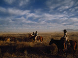 Cowboys on Horseback Among Cattle
