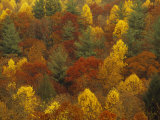 Scenic Mountain Forest in Rich Autumn Colors