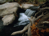 Autumn Scene of a Forest Creek Rushing over Rocks