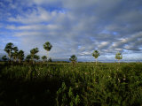 Landscape Picture in an Area of Brazil Where Jaguars Frequent