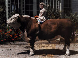 Young Girl Sits on a Hereford in Pleasanton