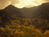 Trees in Autumn Hues Covering Ancient Mountain Ridges