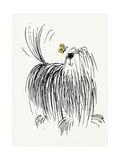Shaggy Dog with Butterfly Reproduction d'art
