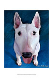 Bull Terrier Bronson