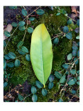 Leaf on Ground with Ivy