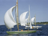 Sailboats Cross a Race Course Starting Line with Wind-Filled Sails