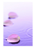 Pink Petals Floating in Water