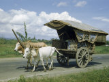 Oxen Pull a Carriage with a Roof and Decorative Side Panels