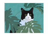 Black and White Cat with Green Eyes Reproduction d'art