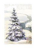 Single Pine Tree in Snow