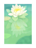 White Lotus Floating in Water