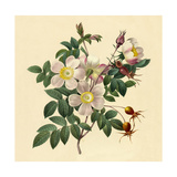 White Floral Illustration