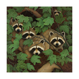 Family of Raccoons Reproduction d'art
