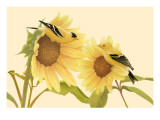 Yellow Birds on Sunflowers