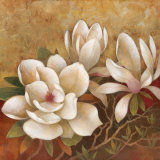 Sweet Magnolia II
