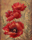 Poppy Passion II