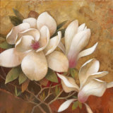 Sweet Magnolia I