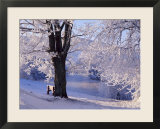 Winter Scene Beside the River Tay  Aberfeldy  Perthshire  Scotaland  UK