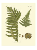 Antique Fern III