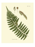 Antique Fern V