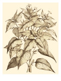 Sepia Munting Foliage III