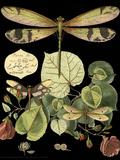 Curieuse libellule sur fond noir II Reproduction d'art