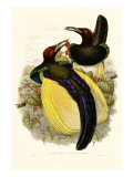 Gould Bird of Paradise IV