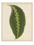 Textured Leaf Study III
