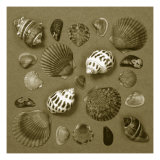 Shell Collector Series V