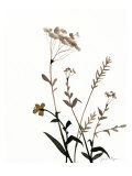 Watermark Wildflowers X