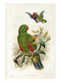 Gould Parrots I