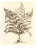 Sepia Munting Foliage VI