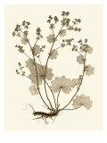 Sepia Nature Study I