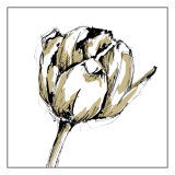 Tulip Sketch II