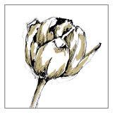 Tulip Sketch II