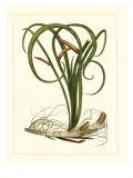 Exotic Flora VI