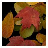 Vivid Leaves III