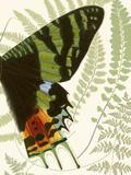 Butterfly Symmetry II Reproduction d'art par Vision Studio