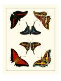 Cramer Butterflies II