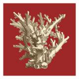 Coral on Red I Reproduction d'art par Vision Studio