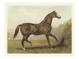 Cassell&#39;s Horse III