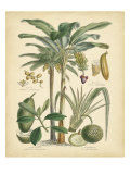 Fruitful Palm II