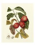Island Fruits III