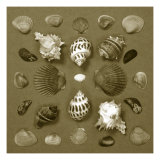 Shell Collector Series VI