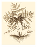 Sepia Munting Foliage IV