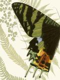 Butterfly Symmetry I