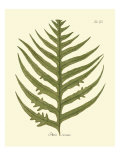 Antique Fern VIII